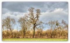 Ligne (au35) Tags: haie tree arbres ciel nuages brulain campagne pré promenade deuxsèvres