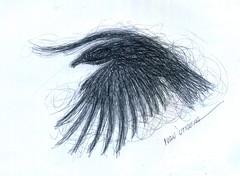 pajaro a lapicero (ivanutrera) Tags: draw dibujo drawing dibujoalapicero boligrafo bird animal ave sketch sketching pajaro pajarito lapicero pen dibujoaboligrafo
