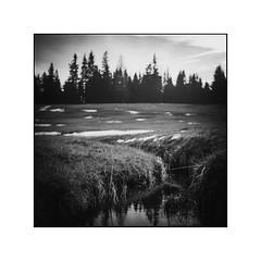 Ich hört ein Bächlein rauschen (cardijo) Tags: austria österreich salzburg landscape landschaft bw blackandwhite sw schwarzweis monochrome analog film ilford fp4 rodinal rolleiflex tessar carlzeiss nikon coolscan