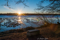 Dechsendorfer Weiher Sonnenuntergang 2 (pego28) Tags: 2017 baum d800 dechsendorf dechsendorfweiher eis natur nikon sonnenuntergag wasservögel winte bird ice nature sunset tree bank bench