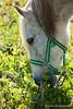 #caballo #horse #2016 #alhauríndelatorre #málaga #andalucía #españa #spain #animal #campo #country #naturaleza #nature #aventuras #adventures #paisaje #landscape #photography #photographer #picoftheday #sonystas #sonyimages #sonyalpha #sonyalpha350 #sonya (Manuela Aguadero PHOTOGRAPHY) Tags: españa alhauríndelatorre campo paisaje horse landscape sonyimages photography spain caballo sonya350 nature aventuras sonyalpha photographer naturaleza animal sonyalpha350 2016 sonystas country picoftheday andalucía adventures málaga alpha350