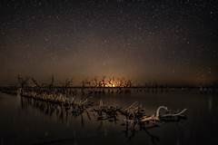 Dead trees (karinavera) Tags: travel sonya7r2 nature epecuen tree longexposure buenosaires night death starry flood