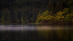 Loch Ard (GenerationX) Tags: blue trees mist green water forest reflections landscape dawn mirror scotland still cross unitedkingdom scottish neil calm fullmoon foliage gb moonlight milton trossachs barr gloaming aberfoyle lochard lochardforest