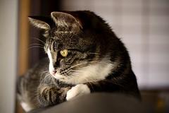 (Giopuppy) Tags: primavera nature animal animals japan nikon natura kawaii  shimane  giappone animali animale shimaneken  giapponese izumo  2015       sagiura d3100 nikond3100   d3100