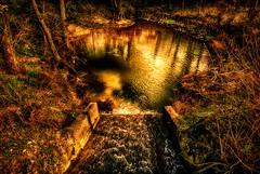 Oase (Delbrücker) Tags: nature outdoor natur teich oase