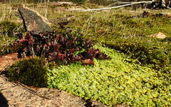 Our rocky outcrop in winter (best viewed full screen) (Lesley A Butler) Tags: nature moss rocks frost australia victoria granite rockformations tolmie 2015620