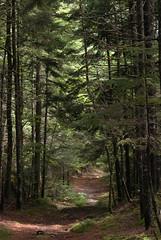 Hike up Beech Mountain (susannahclary) Tags: nature nationalpark maine np acadia