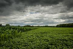 farm fresh (cory.bunting) Tags: sky beautiful clouds corn cloudy farm farmland pa seaofgreen