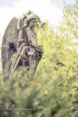 angel sculpture between blurred spring foliage (Armin Staudt) Tags: old red sculpture tree art church stone angel hope leaf spring women grunge religion blurred trastevere foliage granite weathered spirituality catholicism defocused religioussymbol