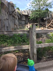 "Paul See a Bear at Brookfield Zoo • <a style=""font-size:0.8em;"" href=""http://www.flickr.com/photos/109120354@N07/19810213538/"" target=""_blank"">View on Flickr</a>"
