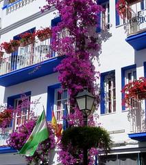 Flores y banderas (camus agp) Tags: espaa ventanas banderas marbella balcones fachadas bougainvilleas buganvillas blancosyazules