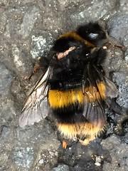 2015-6-Bee