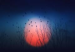 Cuando llega la noche (una cierta mirada) Tags: artlibres