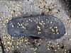 Emily Dickinson's Slippers (Mayank Austen Soofi) Tags: delhi walal emily dickinson slippers sandals