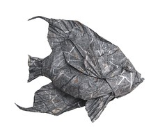 Angelfish (folding~W.EL.L) Tags: origami fish paper folding angelfish sea ocean