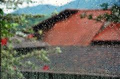 qdo a chuva cai... (Ruby Ferreira ®) Tags: rain chuvadeverão branches droplets roofs
