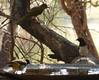 Bird Bath (tapaculo99) Tags: africa zambia kafuenationalpark birds aves bulbul greenbul yellowbelliedgreenbul chlorocichlaflaviventris darkcappedbulbul pycnonotusbarbatus starling violetbackedstarling plumcoloredstarling cinnyricinclusleucogaster
