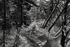 Verschneiter Pfad (Helmut Reichelt) Tags: bw sw pfad verschneit sonneneinfall winterwald wald schnee januar winter isarauen geretsried bayern bavaria deutschland germany leica leicam typ240 captureone10 silverefexpro2 leicasummilux50mmf14asph