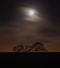 Crazy Weather Day (Chris Willis 10) Tags: trees sunset dusk silhouette moon wind dark night long exposure crazy weather gales winter sky