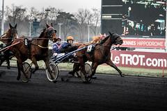 Au Finish (photosreggar) Tags: bleu vincennes chevaux course trot cheval horse franck anne