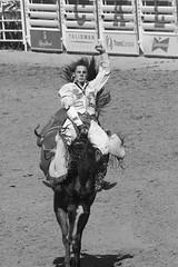 Calgary Stampede (sandraengstrom) Tags: cowboy calgarystampede calgary rodeo blackandwhite