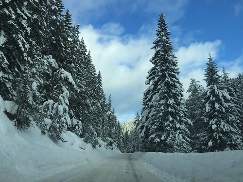My kind of roadtrip😍😍😍 Cold Temperature On The Road Ontheway Road Winter Snow Tree Nature Weather Beauty In Nature Scenics Tranquility Tranquil Scene The Way Forward Covering Day Sky Non-urban Scene Outdoors No People Land