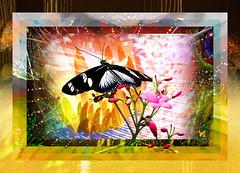 Butterfly (mfuata) Tags: butterfly kelebek çiçek flower doğa nature efekt effect freedom özgürlük