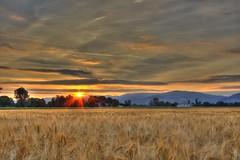 Odenwald Sunrise (Niclas Rhein) Tags: trees sky orange sun sunlight mountains field grass sunshine clouds forest sunrise landscape corn cornfield outdoor wheat feld himmel wolken landschaft sonne bume hdr sonnenstrahlen sonnenschein odenwald getreide weizen