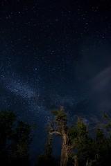 ~the forest was calling, hence the Juniper Games began~ (M Yasir B.) Tags: wild sky night forest way stars astrophotography serene milky juniper natgeo balochistan ziarat