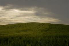 Campos de Castilla, Burgos, Spain (PhotoJorge) Tags: spain burgos camposdecastilla camposdecereal