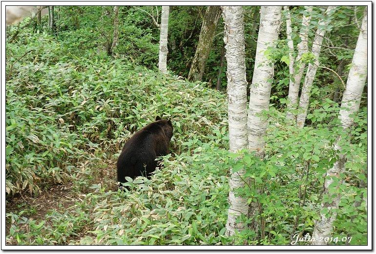 熊牧場 (41)