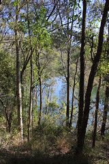 Great North Walk (cathm2) Tags: travel trees nature walking hiking australia nsw centralcoast greatnorthwalk mooneymooney
