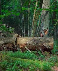 Half way to the top (yellowgreywolf) Tags: trees forest moss stocks sydudden shoutcape bluebarriresyellowgreywofl