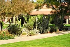 20161214   Cactus garden in a courtyard (lasertrimman) Tags: 20161214 wooddale village retirement community wooddalevillageretirementcommunity suncity az cacti garden courtyard cactigardeninacourtyard ruth