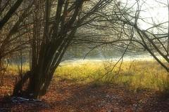 Clairière dans la forêt de l'Illwald (mamietherese1) Tags: world100f fleursetpaysages saariysqualitypictures phvalue