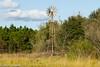 Windmill Whisper - HBM (11Jewels) Tags: canon 70300 circlebbarreserve lakelandfl windmillwhispertrail benchmonday florida