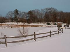 Foxboro Cranberry Nature Trail 9 (dennisgg2002) Tags: foxboro massachusetts ma cranberry bogs winter new england snow landscapes