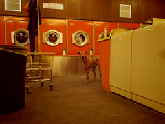 a lady brought her dogs to the laundromat (EllenJo) Tags: highlanderlaundromat clarkdale pentaxqs1 pentax arizona laundry smalltown december8 2016 ellenjo
