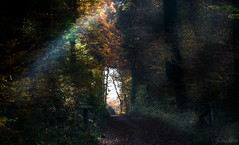 ~~ Le trou de lumière ~~ (Joélisa) Tags: forêt wood lumière éclats rais novembre2015 automne