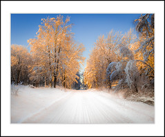 Glowing trees (andreassofus) Tags: winter wintertime snow nature landscape grandlandscape white cold freezing sun sunlight glowing sunset beautiful road sweden swedishwinter naturallight outdoor glaskogen värmland canon