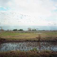 Hula Valley (Gabriela Gleizer) Tags: israel hula valley north galilee nature landscape winter water blue green sky grass film analog analogue mittleformat middleformat mamiya tlr c330 kodak portra 160 aire libre birds rural