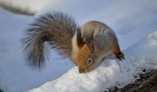 - Where's my nuts? I put them here somewhere!