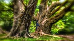 Desfocado - Parque Ibirapuera (Marcos Simanovic) Tags: parquedoibirapuera ibirapuera parqueibirapuera simanovic sãopaulo brazil tree green desfocada