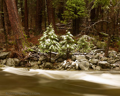 Snowy Trees and Merced River, Mariposa County, CA (4 Corners Photo) Tags: 4cornersphoto california cold color conifer forest landscape mariposacounty mercedriver moss mountains northamerica rock rural scenery sierranevada snow storm tree unitedstates water waves weather winter yosemitenationalpark wawona us