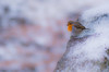 Company (Peter Quinn1) Tags: robin higgertor derbyshire peakdistrict winter company