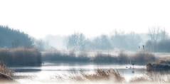 Dreamland in winter sleep. (detlefgabriel17) Tags: river dreamland lowersaxony riveroste oste niedersachsen norddeutschland northgermany winter landschaft landscape bearbeitet edited