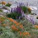 Lakeside Flowers