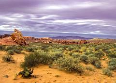 Valley of Fire 3887 D (jim.choate59) Tags: desert valleyoffire vista dry cactus mountains purple scrub jchoate rocks arid expanse nevada firewavetrail sand