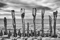 Post-apocalyptic (EVERY SO OFTEN) Tags: uk sea england bw white black beach zeiss coast sony may somerset calm shore posts piles weir costal breakwater porlock