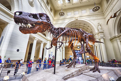 Tyrant King (Kansas Poetry (Patrick)) Tags: chicago fieldmuseum sue tyrannosaur patrickemerson patricklovesnancy patrickiandochicago